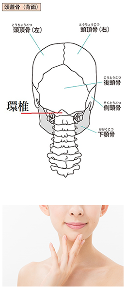 頭蓋骨部位説明付きイラスト/顎を触っている女性